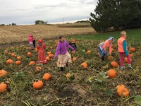 Students in a pumpkin patch (2nd Grade Pioneer Day - Fall 2017)
