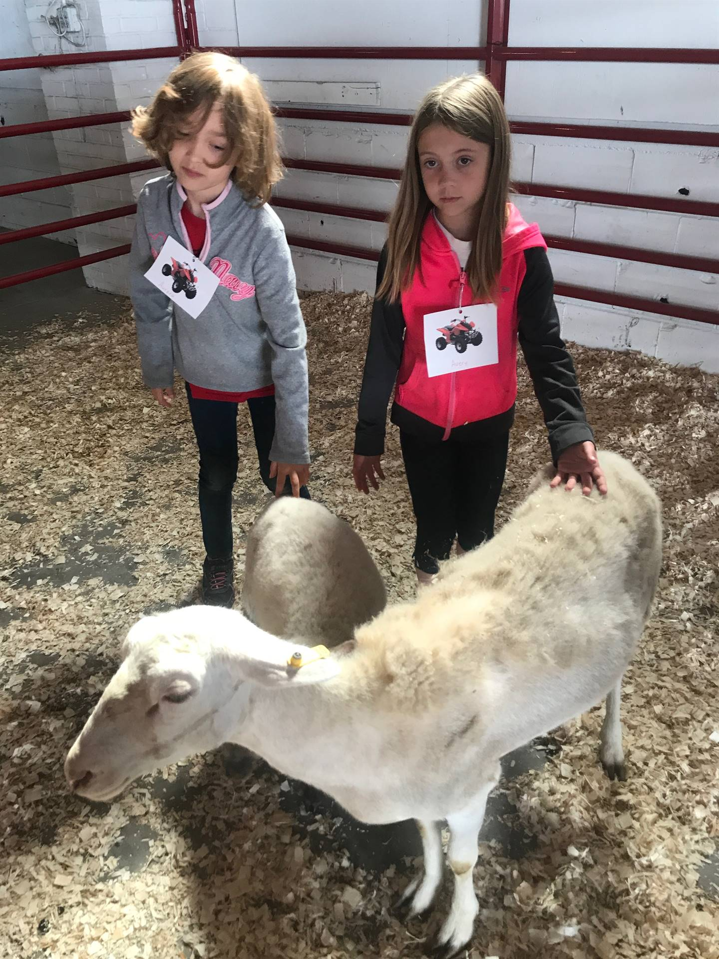 Two elementary students petting a goat