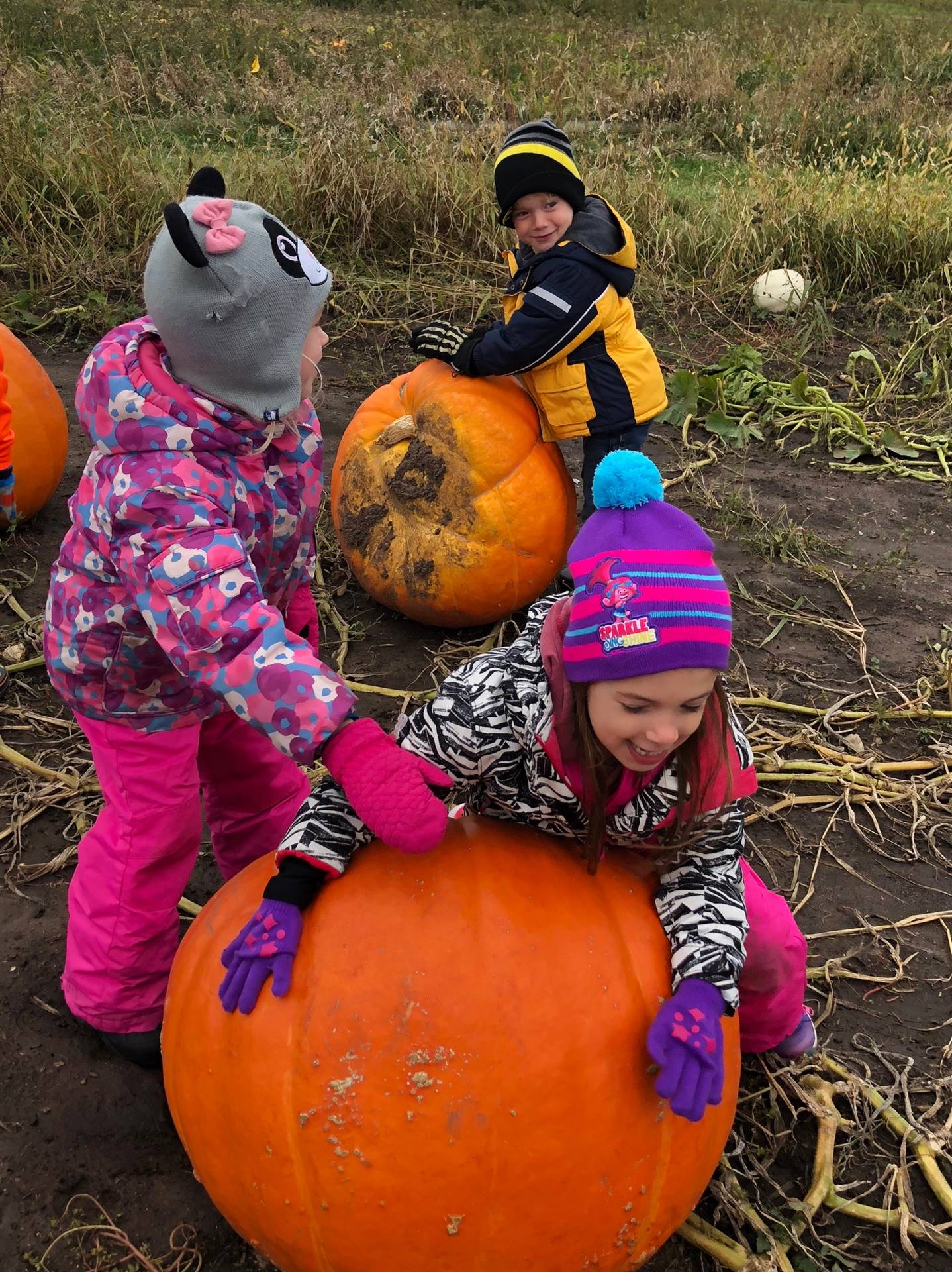 kindergarten students playing on large pumpkins