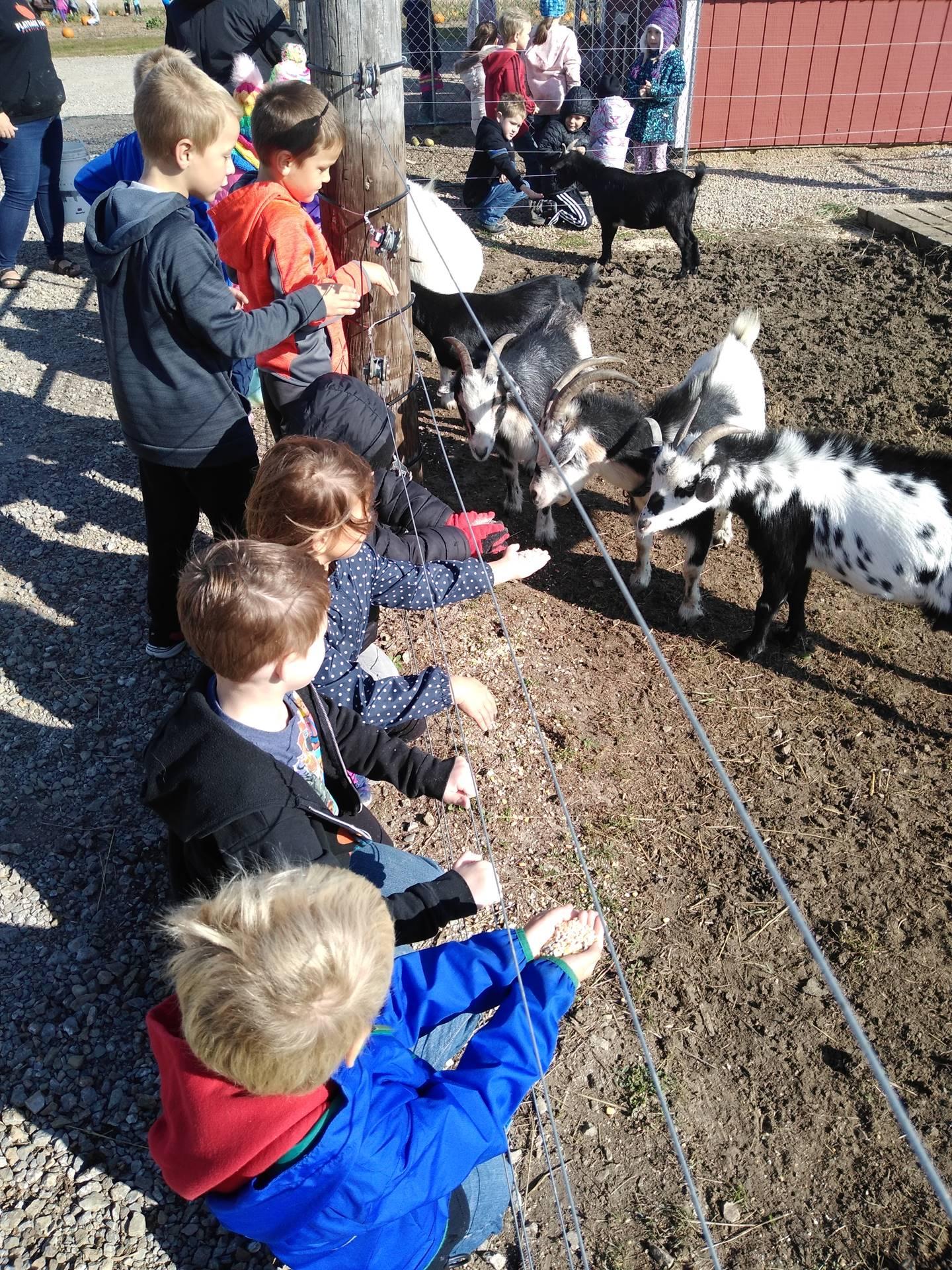 1st grade students feeding goats on a farm